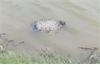 Bắc Giang: Phát hiện ba thi thể trôi trên sông Thương