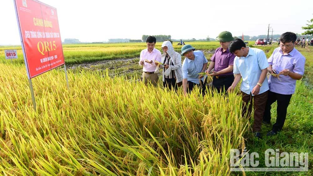 nông dân, làm giàu, Bắc Giang,