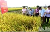 Bắc Giang: Cùng nông dân làm giàu