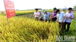 Bac Giang helps farmers get rich
