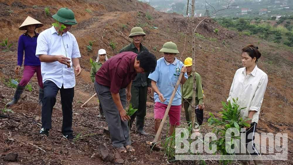 Tranh thủ thời tiết có mưa, người dân tập trung trồng rừng