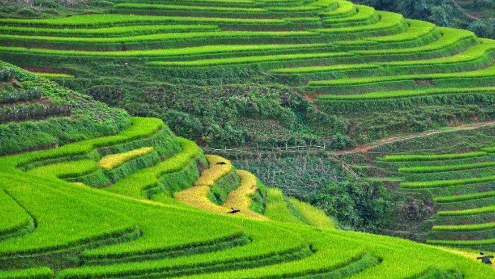 Sa Pa, Ninh Bình, Top điểm hấp dẫn nhất, khám phá, châu Á, TripstoDiscover, điểm du lịch nổi tiếng, ruộng bậc thang, đá vôi nguyên khối