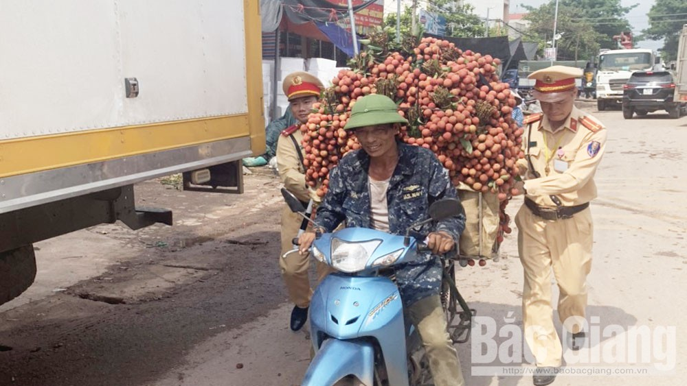 Bac Giang lychee, demanding markets, Bac Giang province,  impact of Covid-19 pandemic, domestic market, total quantity, smooth export activities