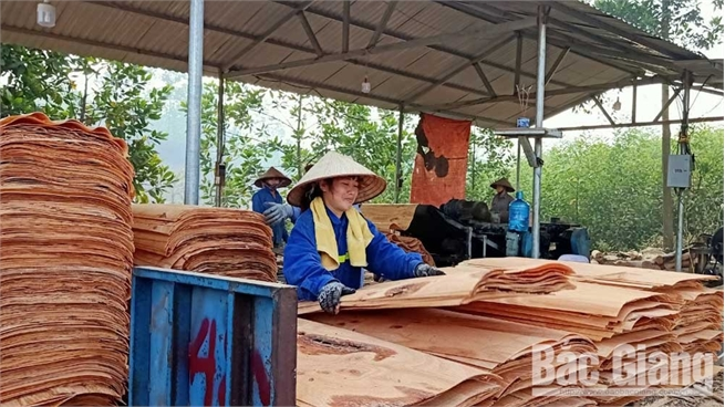 Duong Huu commune (Son Dong) gets rich from forest