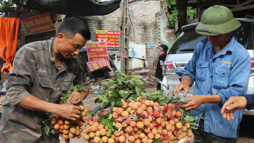 Lychee selling price increases in late season