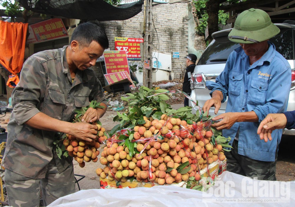Lychee selling price, late season, Bac Giang province, Luc Ngan lychee, last quantity of the fruits, Chinese traders, total lychee output