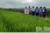 Sản xuất vụ mùa ở Bắc Giang: Mở rộng liên kết, tăng giá trị sản phẩm