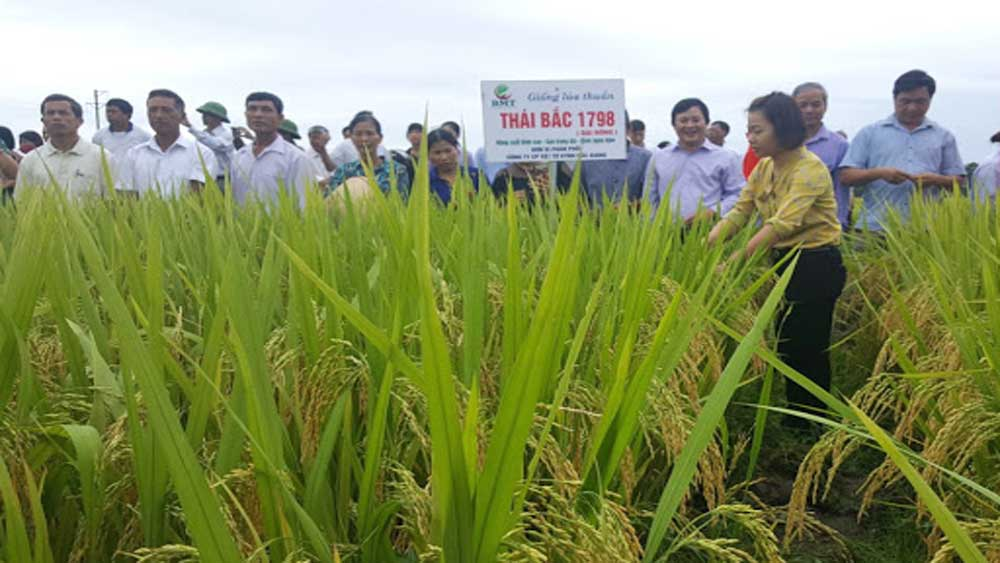 Hiep Hoa builds high - quality rice cultivation area