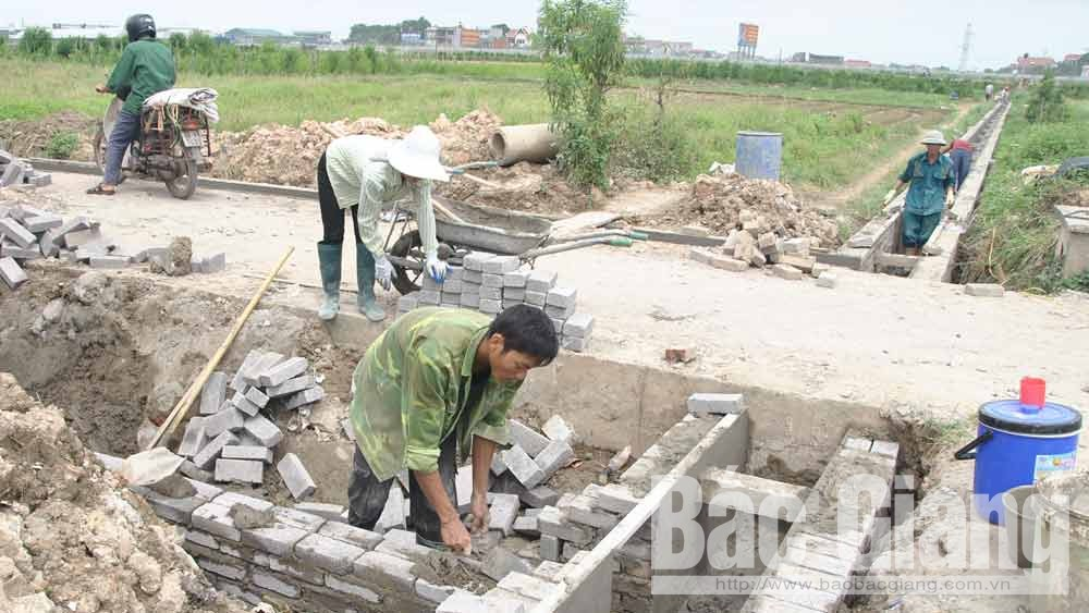 Bac Giang city supports hi-tech vegetable and flower cultivation