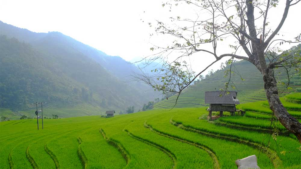 Northern Vietnam commune, spellbinds trekkers, Nam Cang, resort town Sa Pa, beautiful terraced fields, streams and dense forests