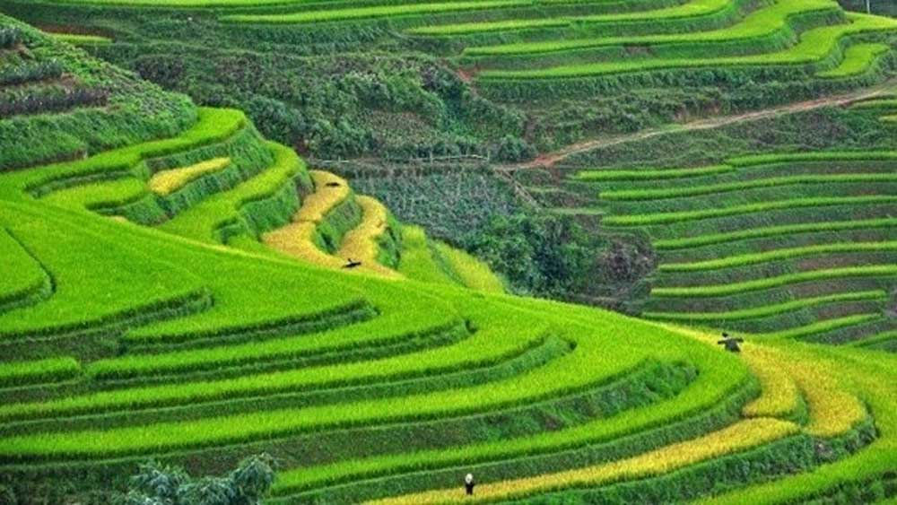 Sapa, Ninh Binh, Asia, up-and-coming destinations, TripstoDiscover, dramatic beauty, world-famous rice paddies, fantastic local handicrafts