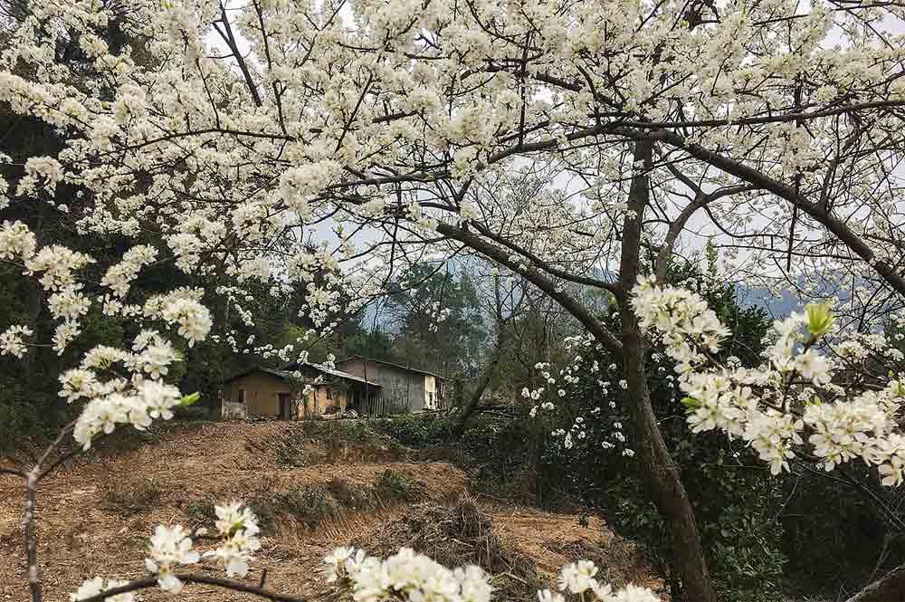 Seasonal loveliness, Mau Son mountain, local lensman, diverse charms, Mau Son peaks, cloud hunting season, unique light