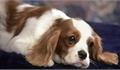 Nhật Bản phát hiện trường hợp thú nuôi trong nhà đầu tiên dương tính với virus SARS-CoV-2