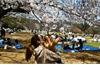 Dân số Nhật Bản giảm năm thứ 11 liên tiếp