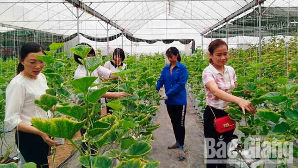 Nhà màng trồng dưa lê Hàn Quốc của gia đình chị Nguyễn Thị Luân ở thôn Núi, xã Dĩnh Trì.     Ảnh: Hải Yến.