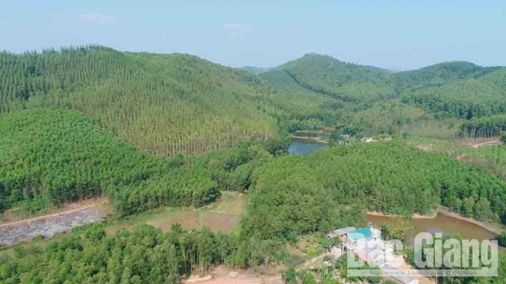 Yên Thế, Bắc Giang, rừng kinh tế, tỷ lệ che phủ rừng
