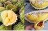 Xuất khẩu trái cây sang Thái Lan tăng 234%