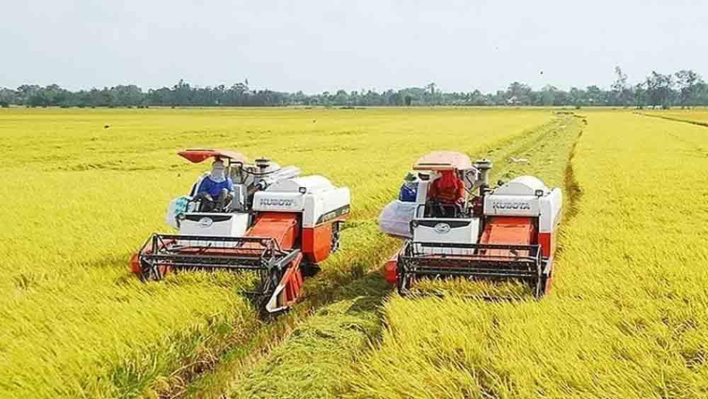 Rice prices, Mekong Delta, increase price, increasing trend,  fragrant rice varieties, summer-autumn harvest season, Covid-19 pandemic