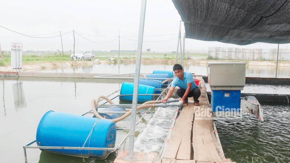 """Yên Dũng, Bắc Giang, phương pháp truyền thống, mô hình nuôi cá """"sông trong ao"""""""