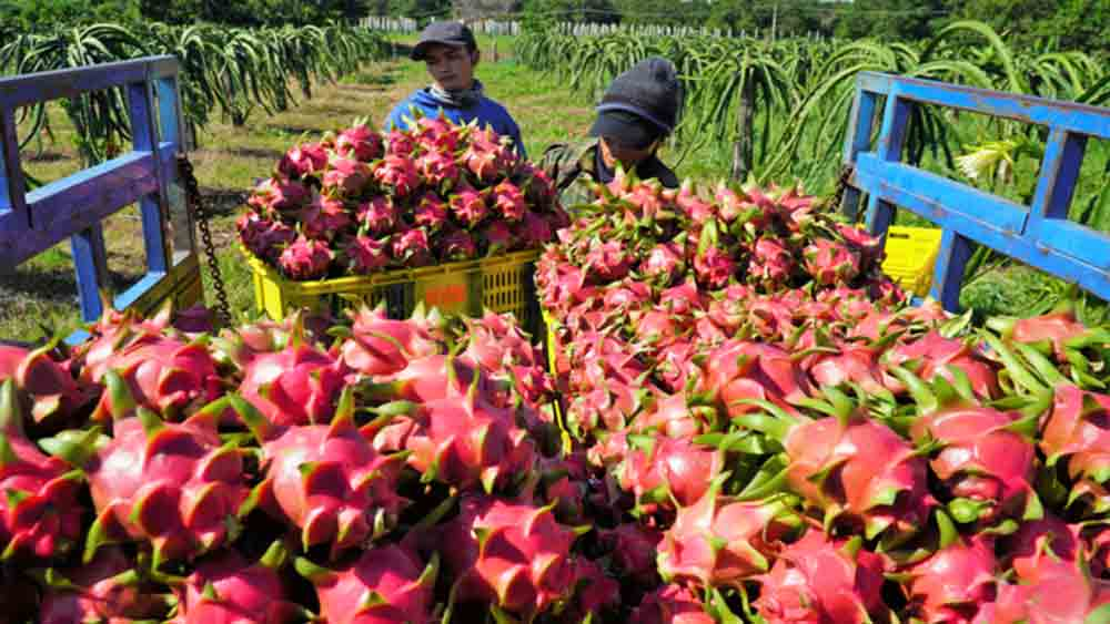 Vietnamese fruit exports to US halted as Covid-19 keeps inspecting officials away