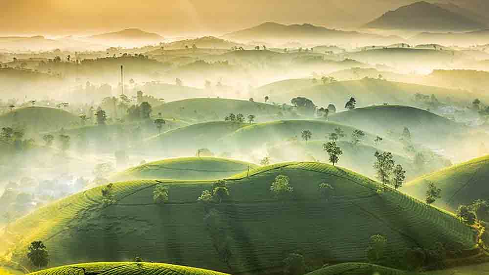 Photo of northern Vietnam tea hills shortlisted in international contest