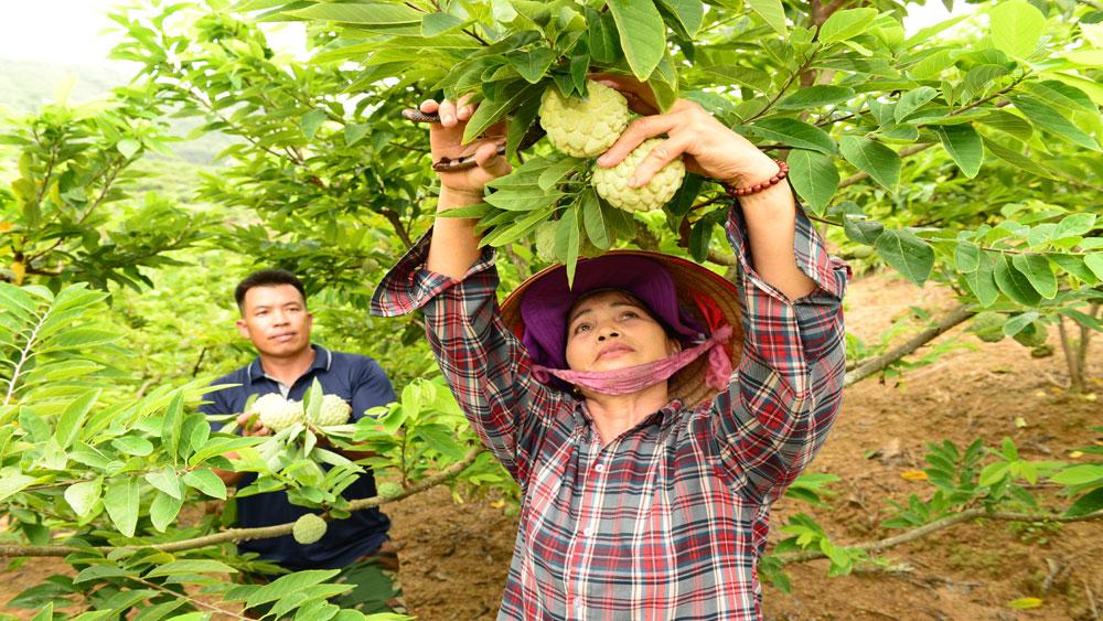 Cấp chứng nhận chỉ dẫn địa lý cho na dai Lục Nam: Thêm cơ hội mở rộng thị trường