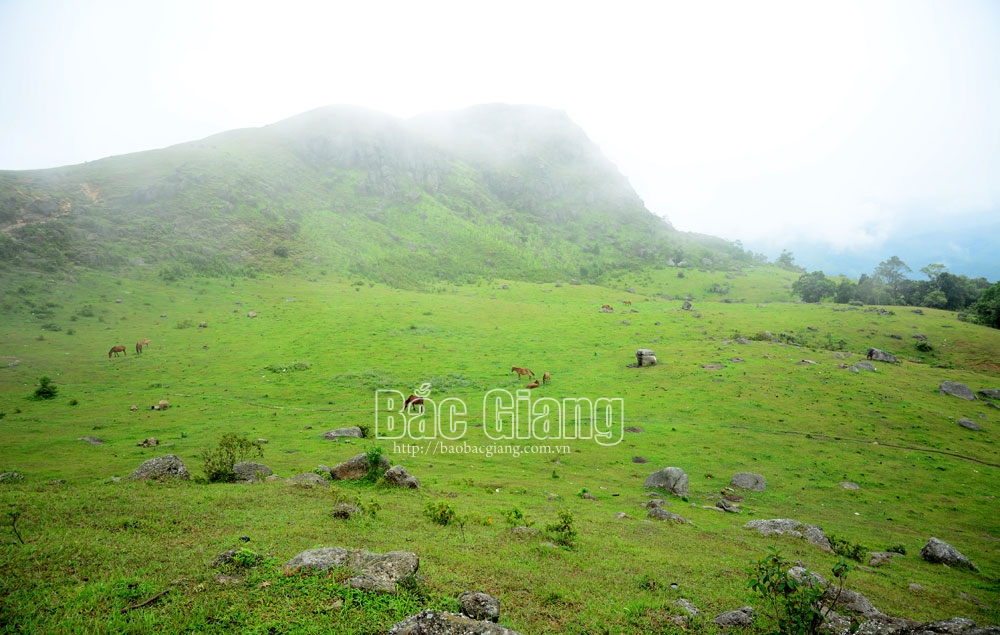 Amazing Son Dong, Bac Giang province, green plateau of Dong Cao, peaceful life, Khe Ro primitive forest,  delicious local dishes