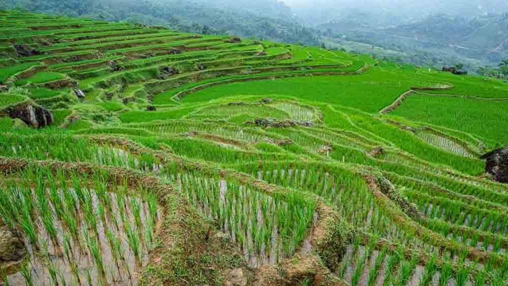 Vietnam, promoting sustainable tourism, foreign tourists, Green Travel, official tourism website, responsible tourism, Vietnamese culture and customs