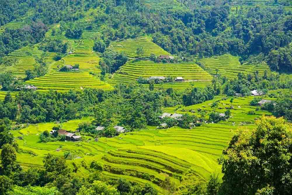 Tay Con Linh peak, rooftop, northeastern Vietnam, mystical moss-covered forest, Ha Giang Province, bamboo forest,