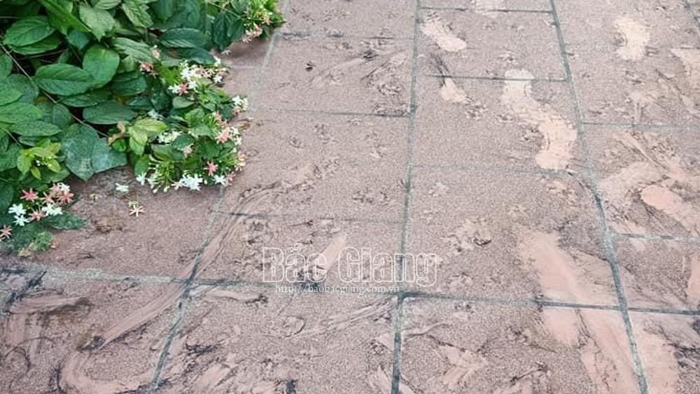 Song Mai: Bụi khói than phủ kín đường làng, ngõ xóm, sân vườn