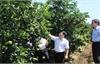 Quản lý chặt mã số vùng trồng nông sản