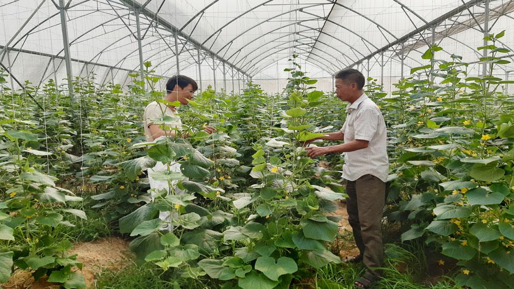 HTX Nông nghiệp công nghệ cao Trí Yên: Sử dụng hiệu quả tem truy xuất nguồn gốc