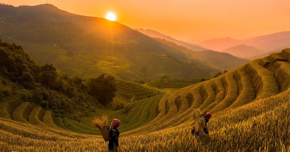 Autumn harvest, sunshine, Vietnam's northern highlands, Golden terraced rice fields, Yen Bai province, Cao Bang province