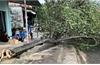 Thiệt hại do bão số 5: 1 người chết, 1 người mất tích, 31 người bị thương