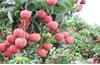 Bắc Giang: 4 sản phẩm được tôn vinh Thương hiệu Vàng nông nghiệp Việt Nam