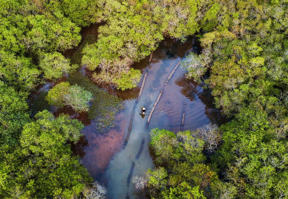 Autumn yellow, takes possession, central Vietnam, Ru Cha mangrove forest, seasonal transition, series of photos