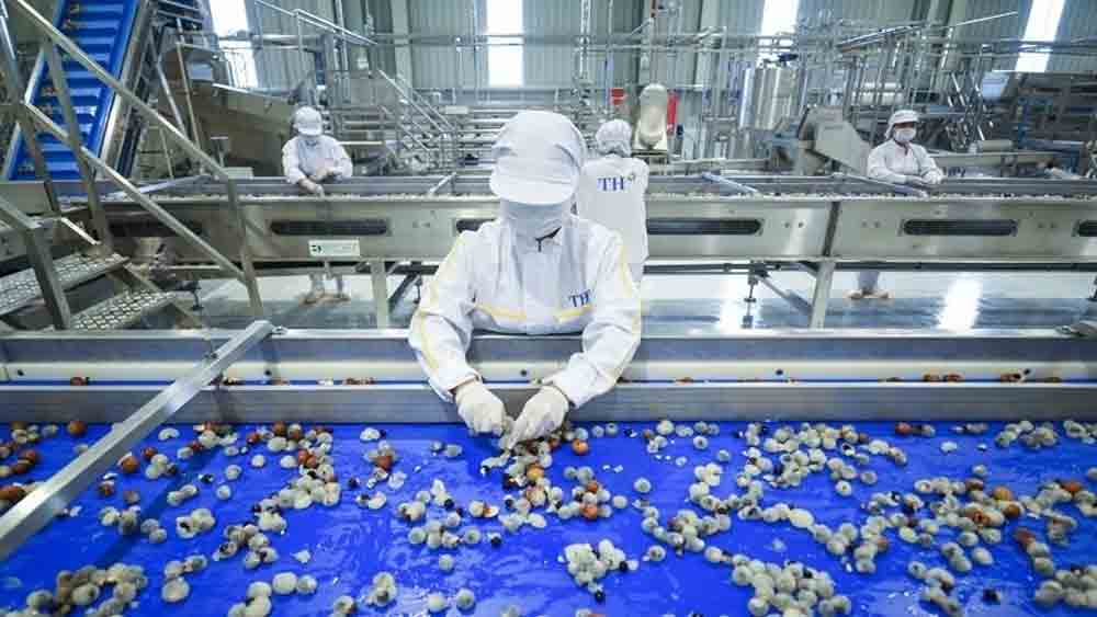 Fresh fruit and herb processing factory comes into operation in Son La