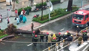 HCMC man dies after crushed by falling tree in torrential downpour