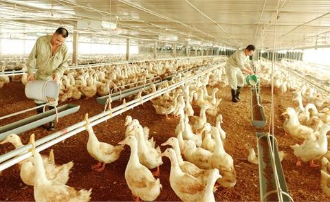 Chăn nuôi công nghiệp