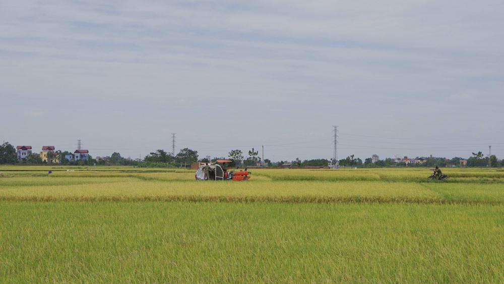 Bắc Giang: Đẩy nhanh tiến độ sản xuất vụ đông 2020