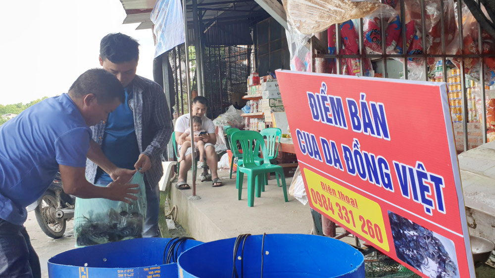 Da crab, specialty in Phuong Hoang land, Yen Dung district, Bac Giang province, family meals and party, crab hotpot, salt fried crab, steamed crab with beer