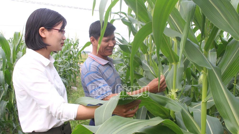 Tân Yên (Bắc Giang): Xây dựng 6 chuỗi liên kết, sản xuất tiêu thụ nông sản