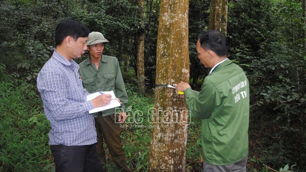 Thành công nhờ đưa giống cây  lâm nghiệp mới vào sản xuất
