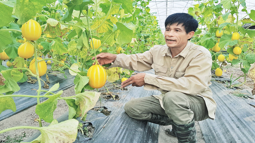 Đảng viên Nguyễn Văn Thoa: Làm kinh tế giỏi, tích cực với việc chung
