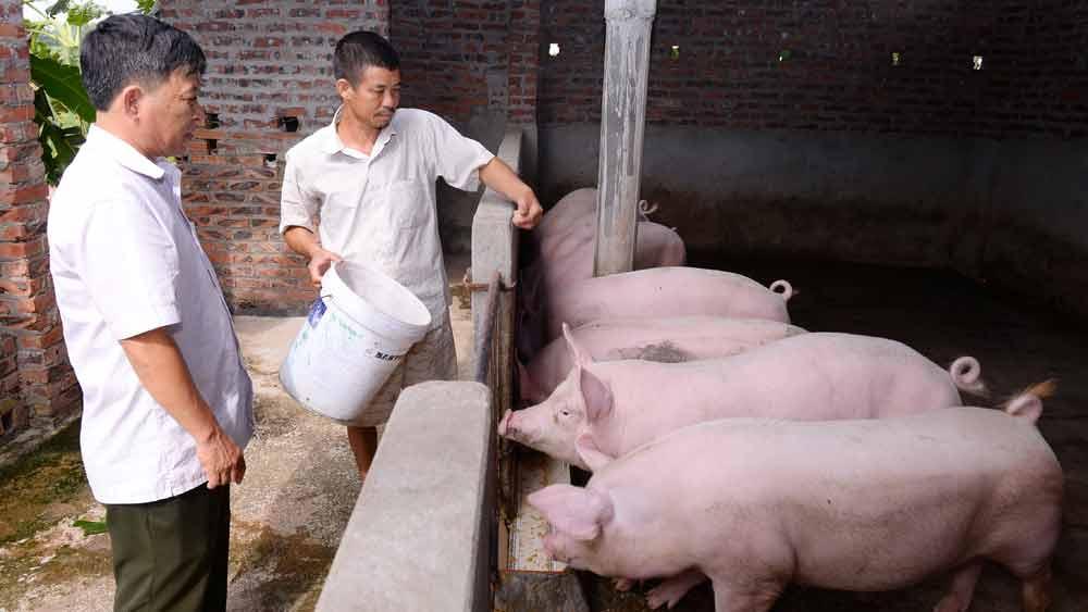 Giá lợn hơi  giảm mạnh