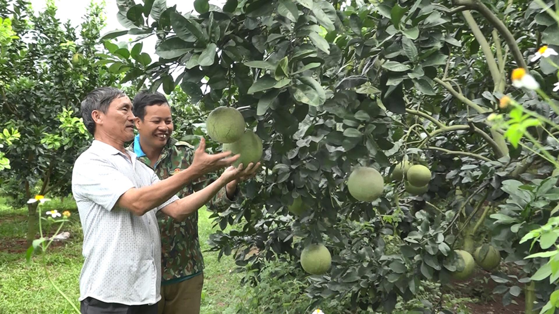 Lục Ngạn: Vườn quả bạc tỷ sẵn sàng đón khách