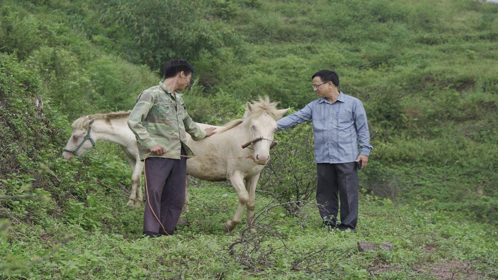 Nhân rộng đàn ngựa bạch