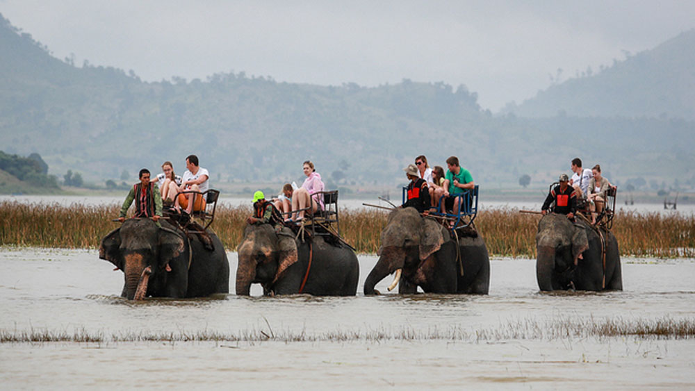 Central Highlands province, ban on elephant rides, safety and welfare concerns, Dak Lak Province, famous elephant-back tours, animal protection concerns