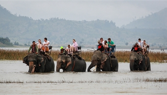 Central Highlands province mulls ban on elephant rides on safety, welfare concerns
