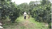 Lục Ngạn: Chọn 30 hộ có vườn cam, bưởi đẹp đón khách du lịch